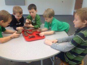 Examining Plant Fossils